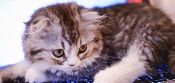 ステップメールをしているとなぜか邪魔してくる猫